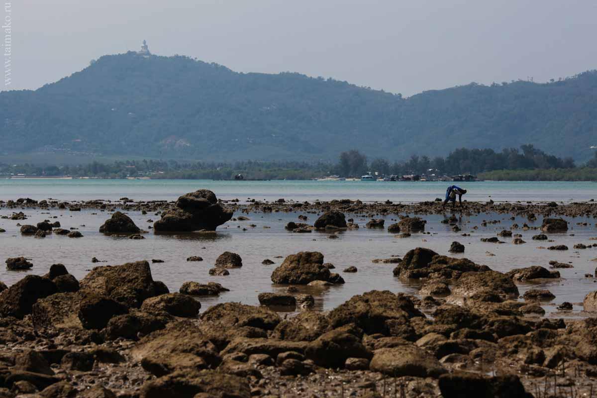 mangrove-panwa-10