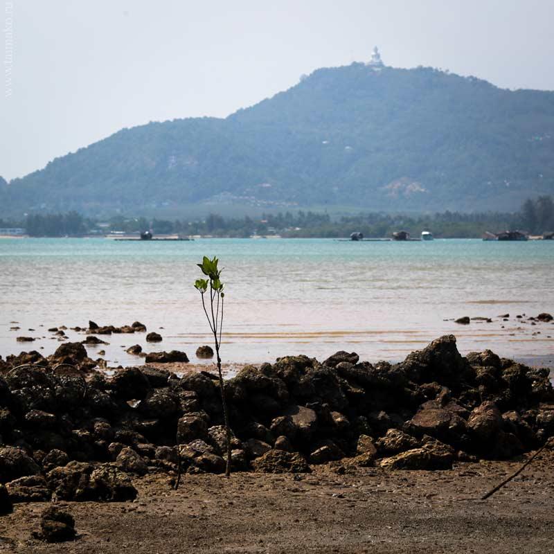 mangrove-panwa-4