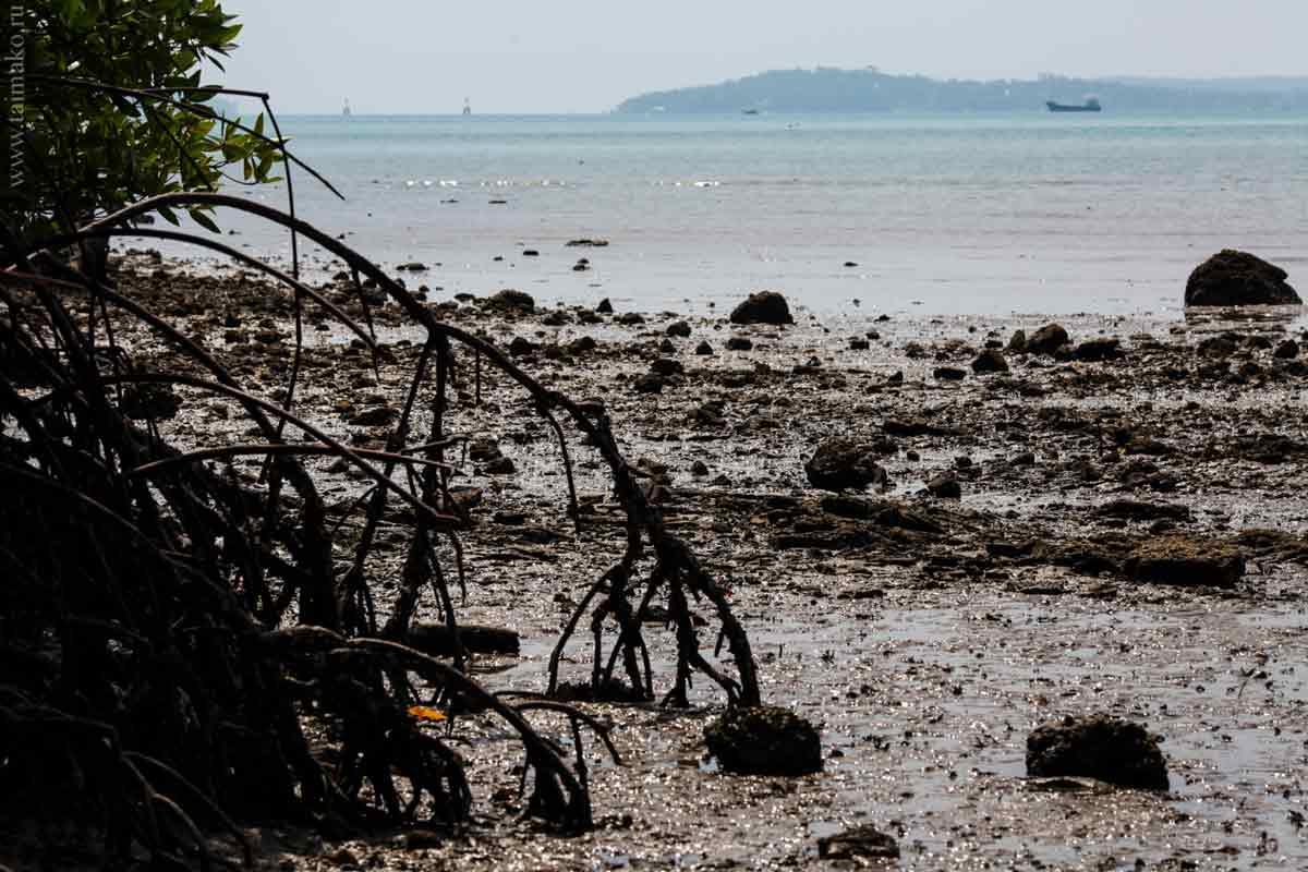 mangrove-panwa-5