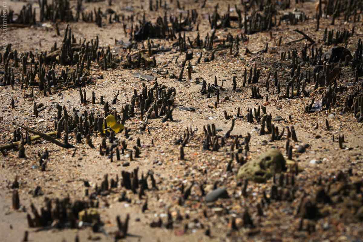 mangrove-panwa-7