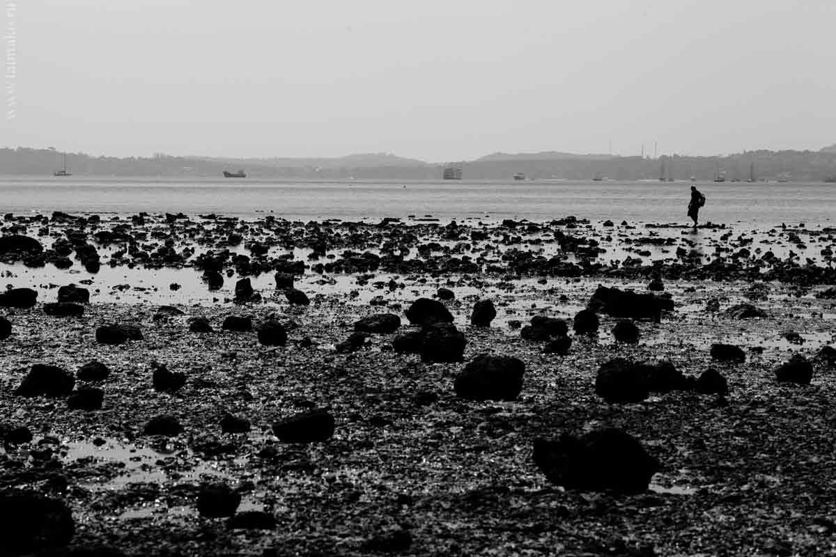mangrove-panwa-9