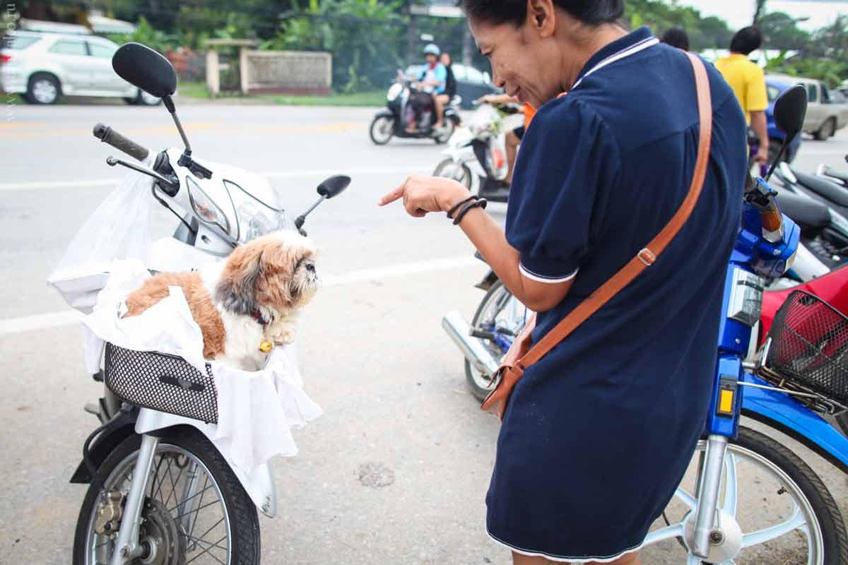 phuket-chalong-market-9