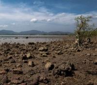 mangrove-panwa-11