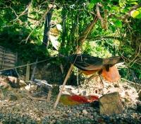 mangrove-panwa-12