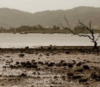 mangrove-panwa-6