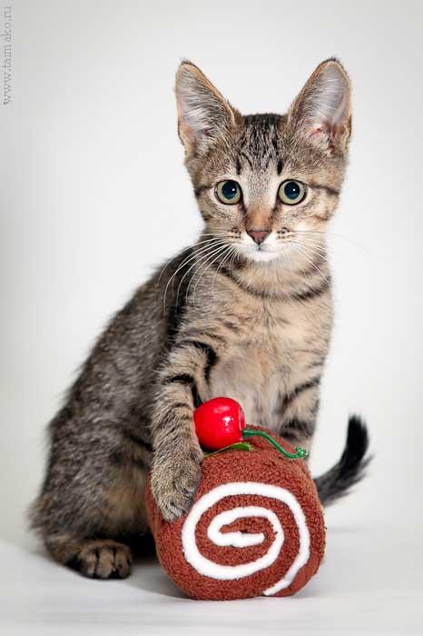 Котенок с пироженкой