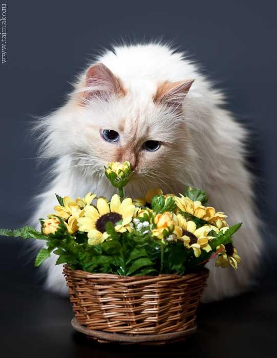 Марсик нюхает цветы