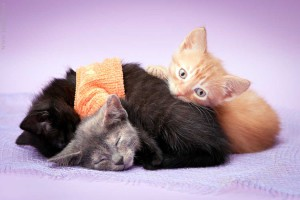 Котята дружно спят
