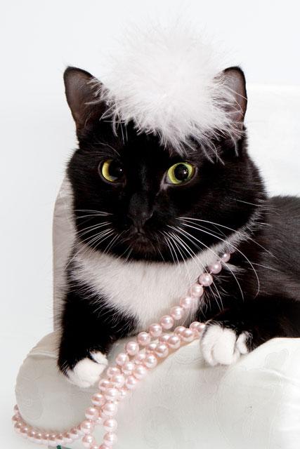 Черно-белая кошка