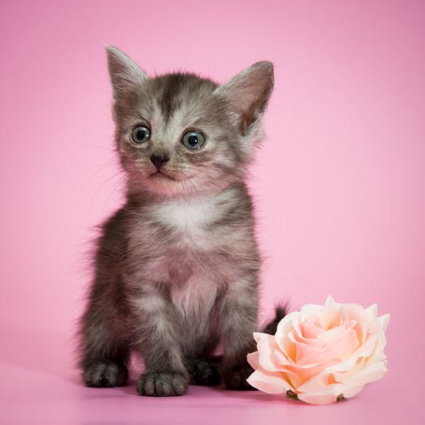 Котёнок с цветком