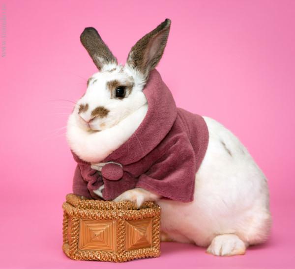 Фотосессия кролика