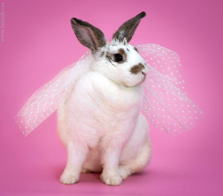Крольчонок в фате