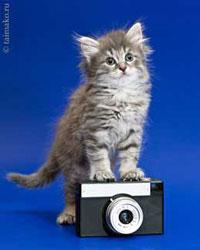 Котенок хочет фотографировать