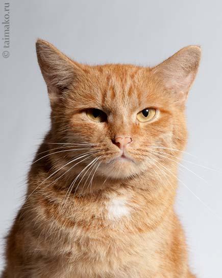 Крутой кот фото