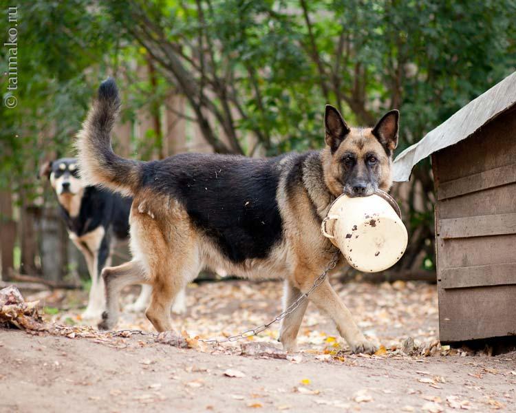 Собака с кастрюлей фото