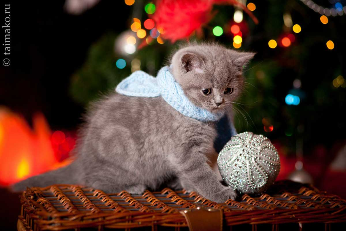 Christmas-kitty