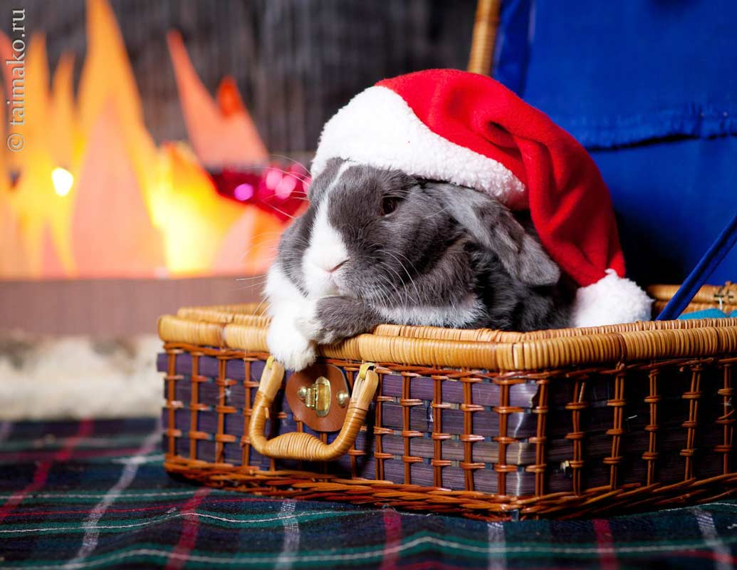Christmas-rabbit