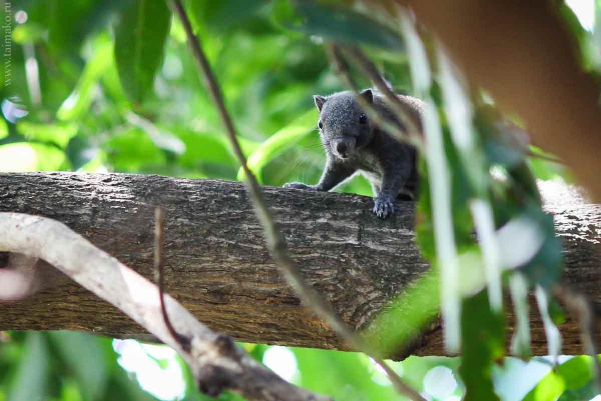 Animals-Phuket-1-2