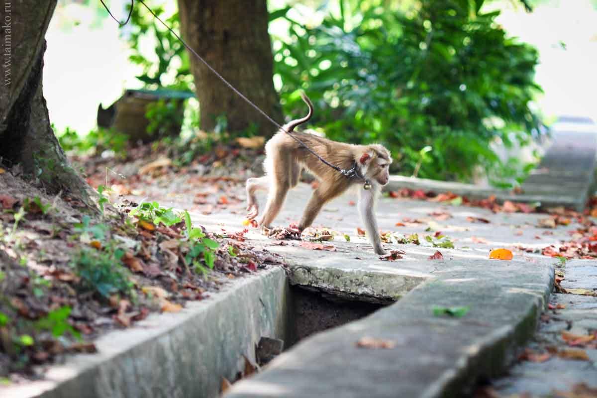 Animals-Phuket-2-2