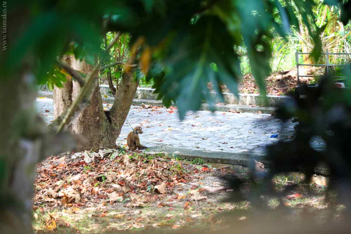 Animals-Phuket-3