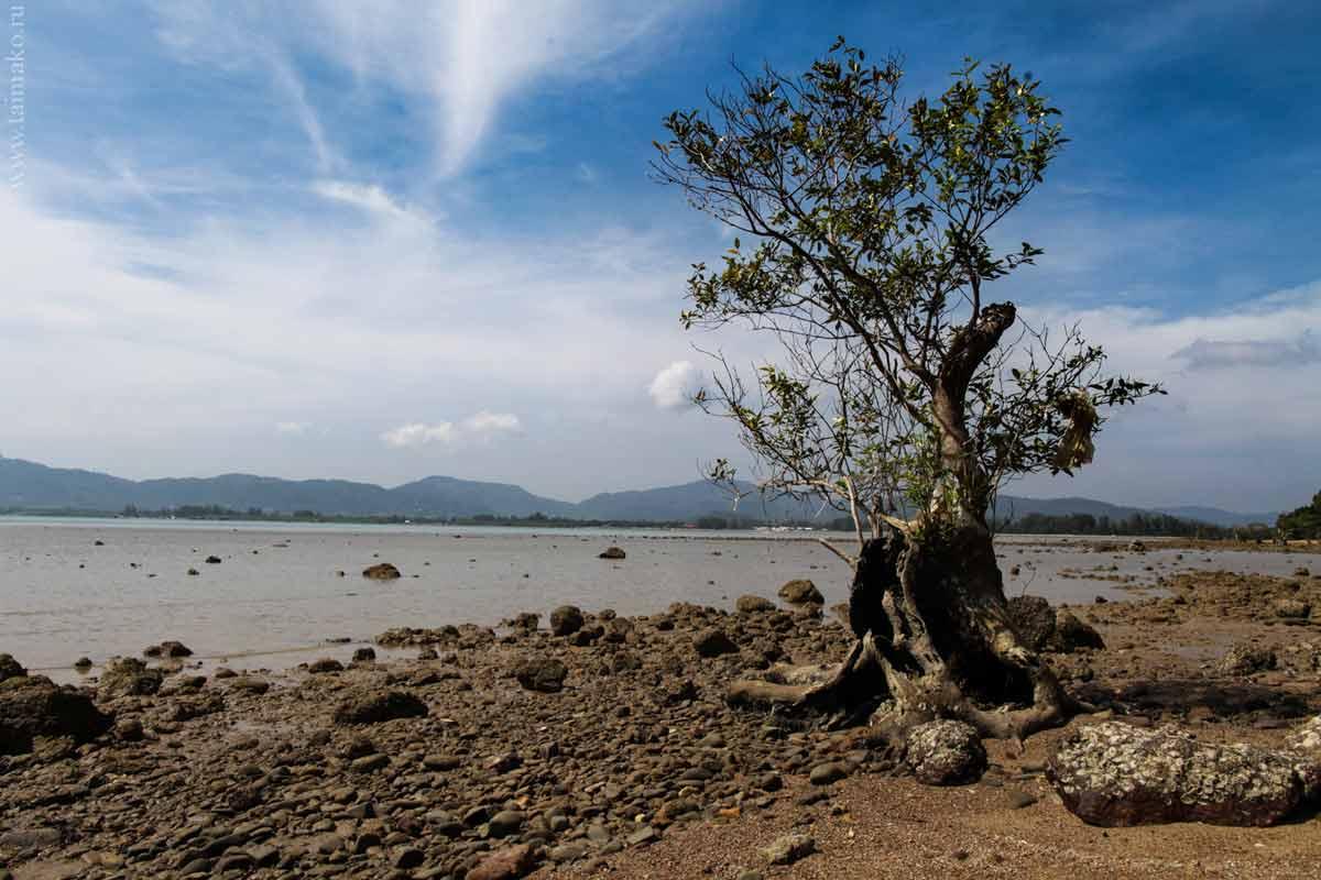 Mangrove-panwa-13