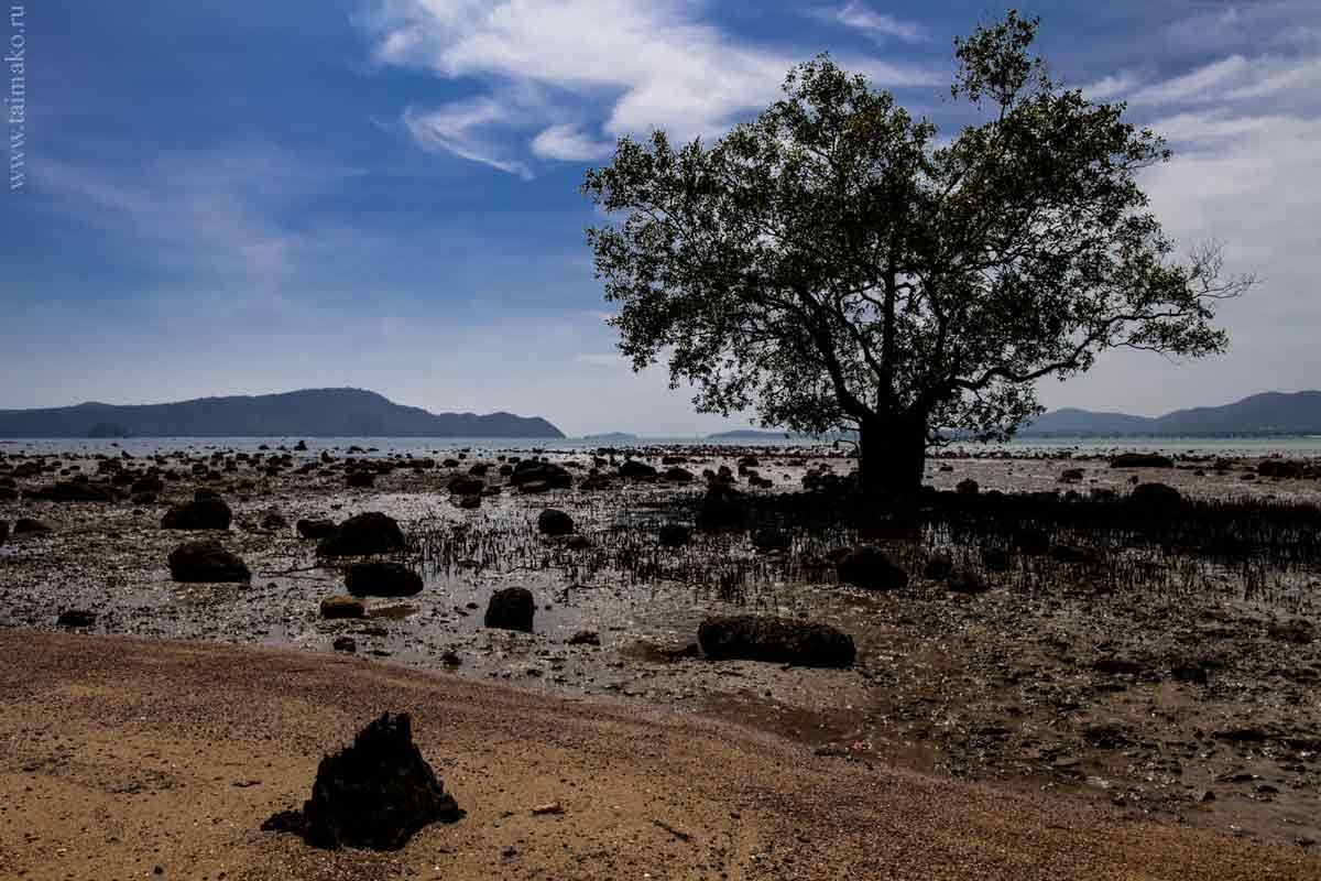 Mangrove-panwa-8