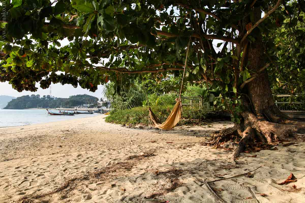Turtle-Phuket-15