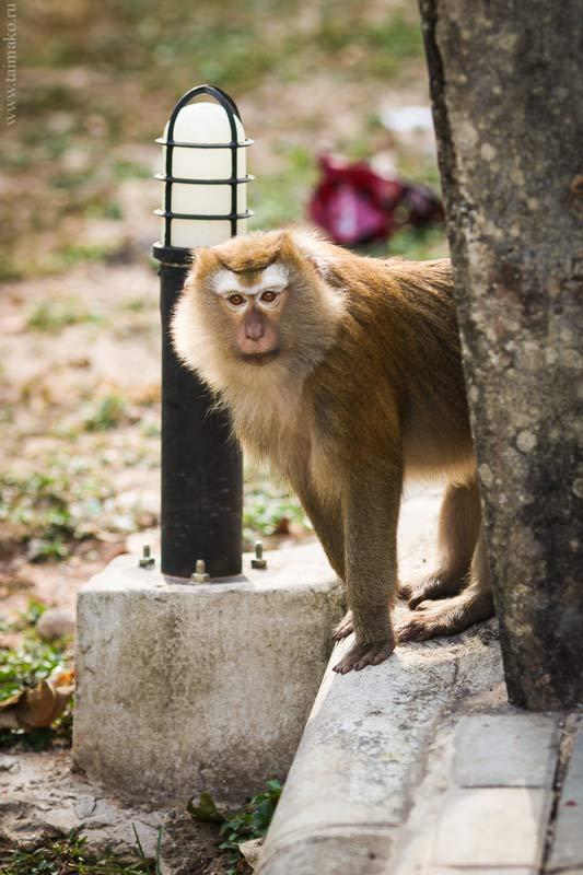 Monkey-Hill-1