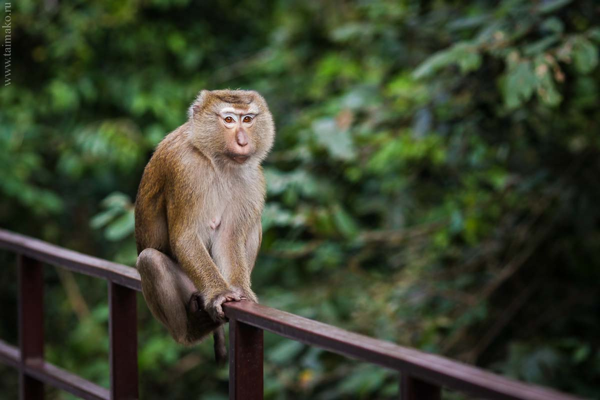 Monkey-Hill-13