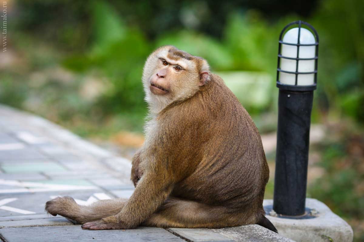 Monkey-Hill-14