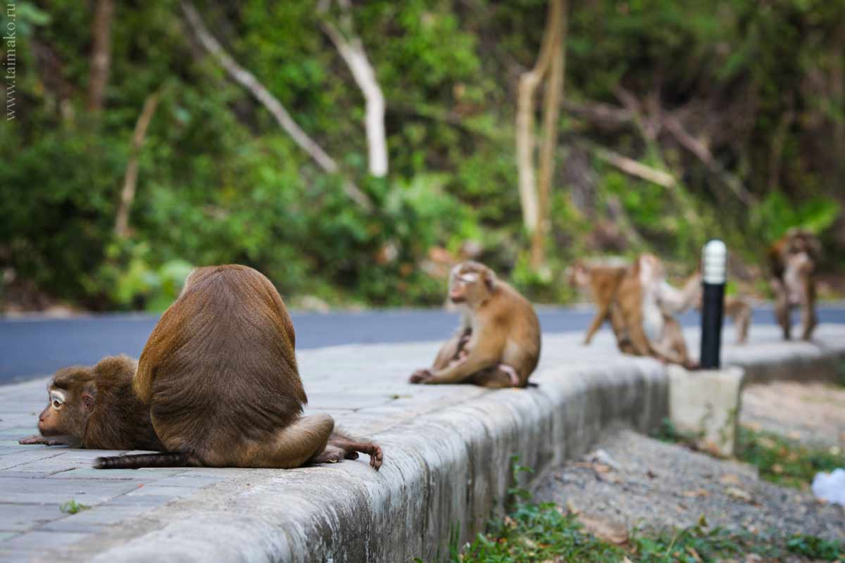 Monkey-Hill-15