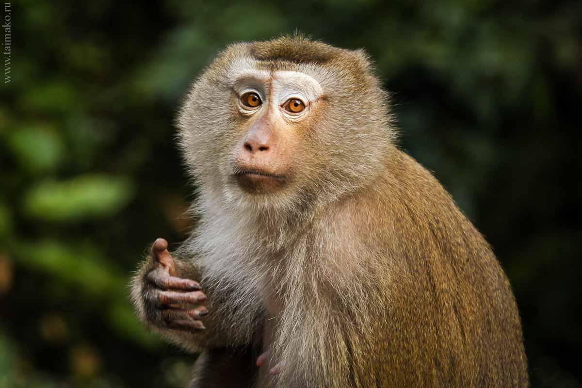 Monkey-Hill-16