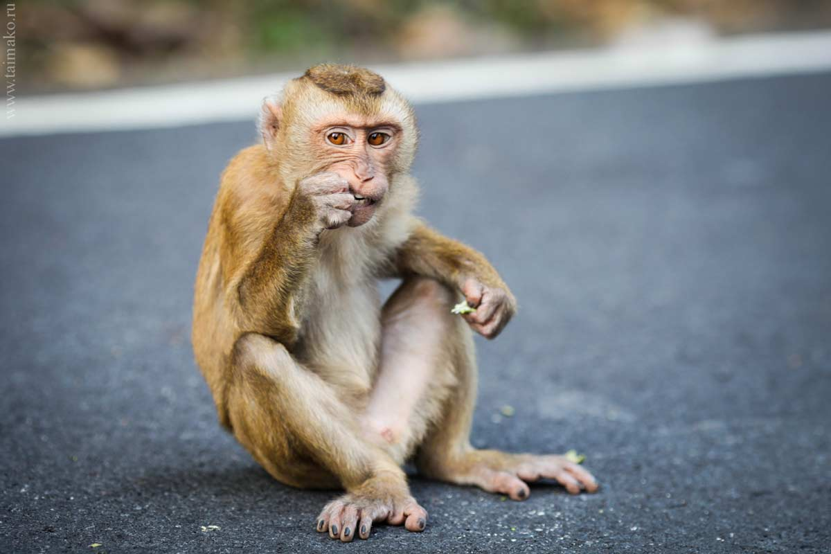 Monkey-Hill-18