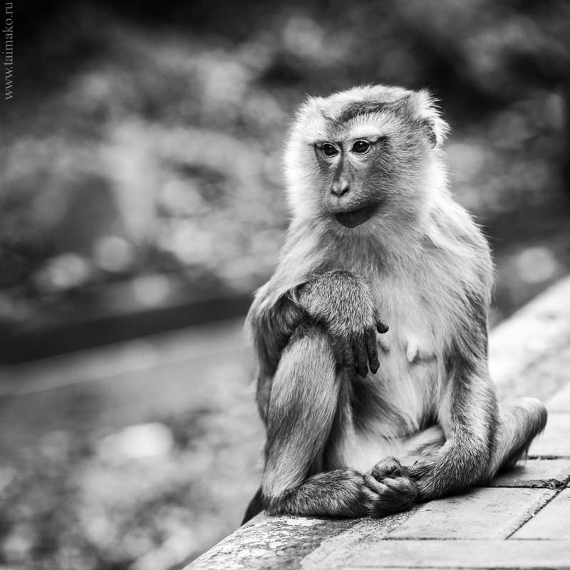 Monkey-Hill-19