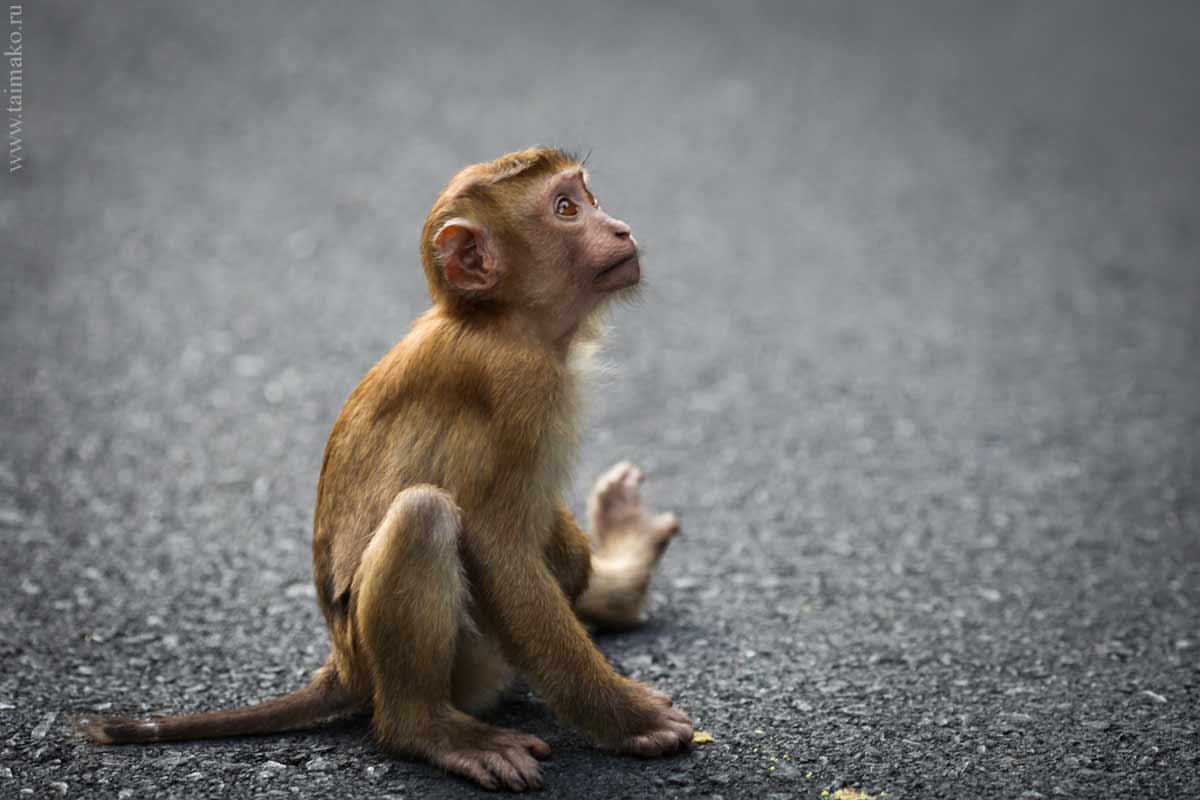 Monkey-Hill-24