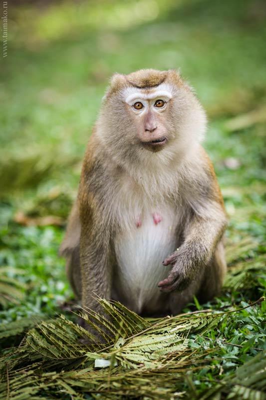 Monkey-Hill-3