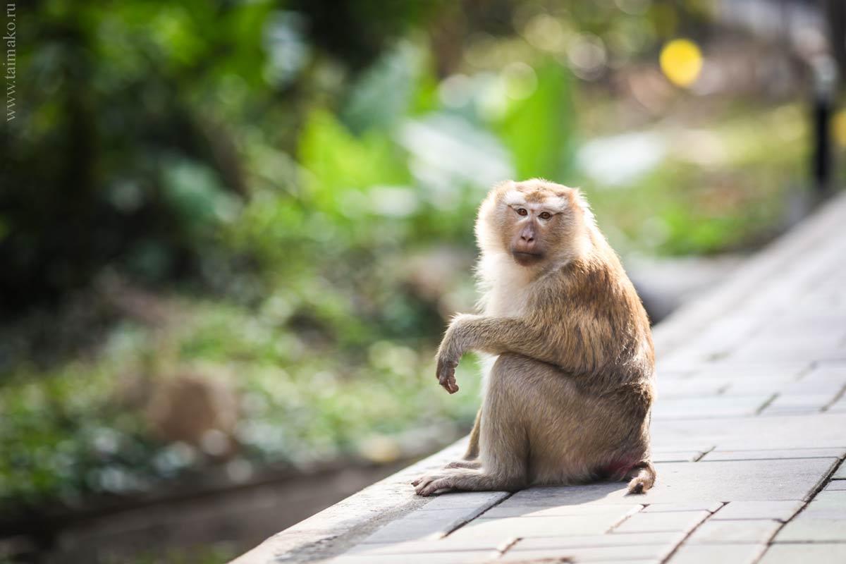Monkey-Hill-4