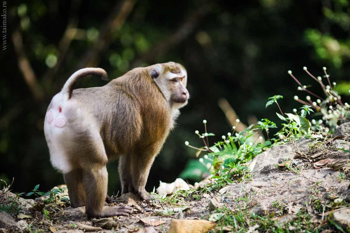 Monkey-Hill-5