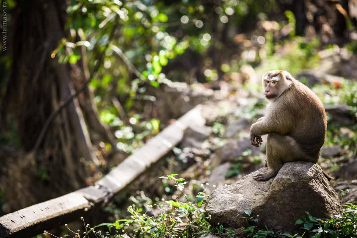 Monkey-Hill-6