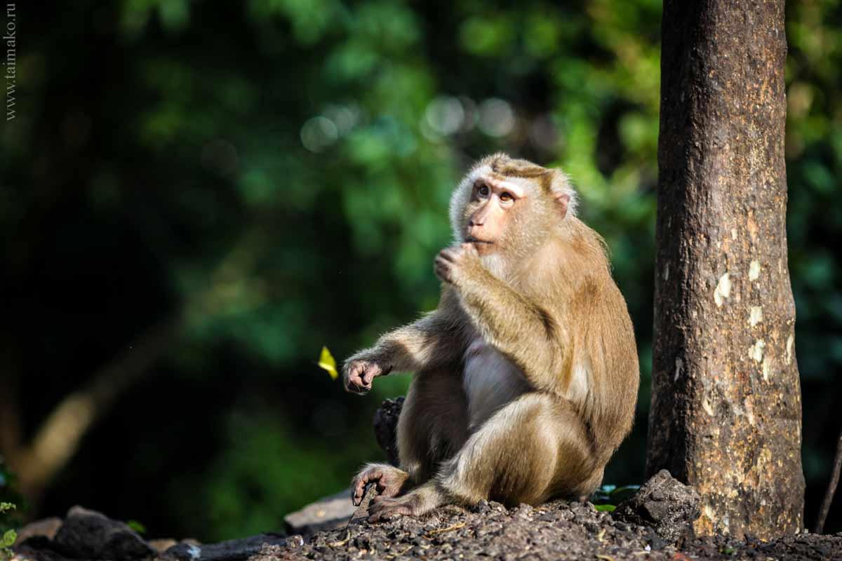 Monkey-Hill-7