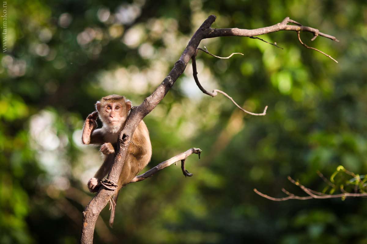 Monkey-Hill-8